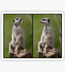 Meerkat Pose Sticker