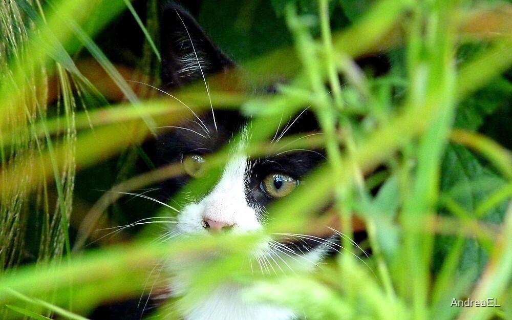 Peekaboo! Spike Kitten - Southland New Zealand by AndreaEL