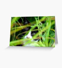 Peekaboo! Spike Kitten - Southland New Zealand Greeting Card