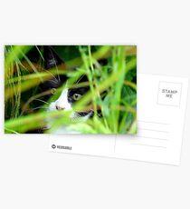 Peekaboo! Spike Kitten - Southland New Zealand Postcards
