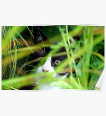 Peekaboo! Spike Kitten - Southland New Zealand Poster