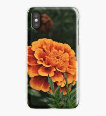 Marigold Close-up iPhone Case/Skin