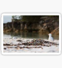 Lone Seagull, Jervis Bay, NSW, Australia Sticker