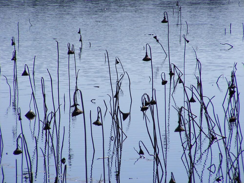 Lifeless Water Lilies by dashley