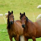 It Takes Two To Tango - Horses - NZ by AndreaEL