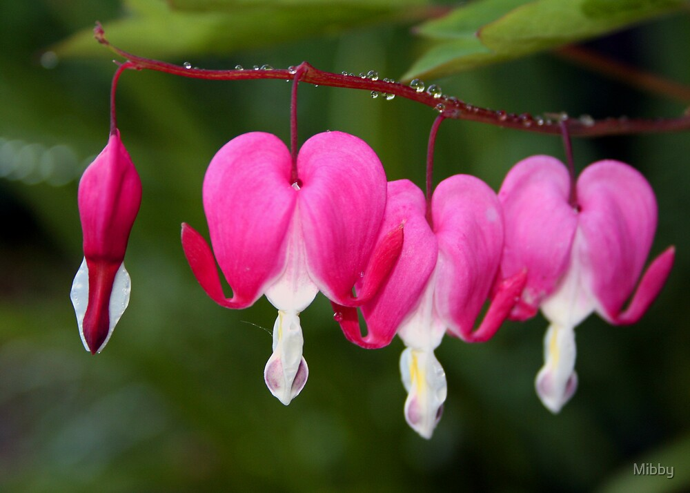 Bleeding Heart by Mibby