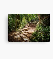 Rainforest Staircase Canvas Print