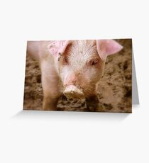 Oh No Mum.. I Didn't Have Any Curds And Whey This Morning!! - Baby Piglet - NZ Greeting Card
