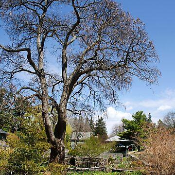 Botanical Garden Landscape by rollosphotos