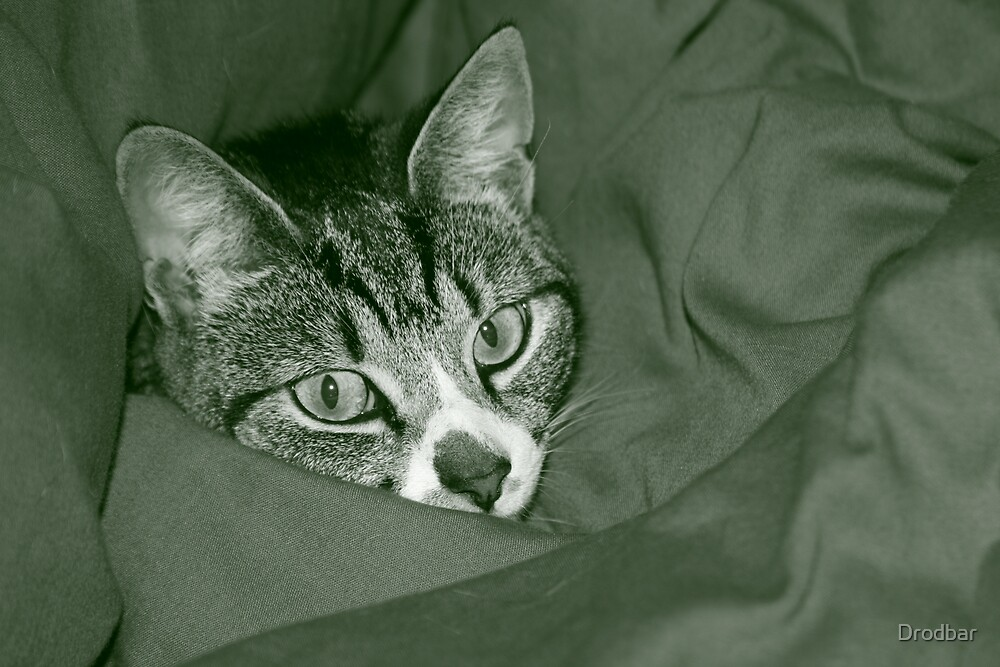 Cat in Duvet by Drodbar