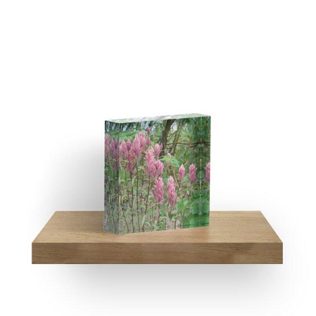 Nature, USA, Alaska, Blumen, rosa, Fotografie, BebiCervin by BebiCervin