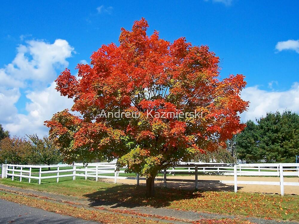 Autumn Tree by andykazie