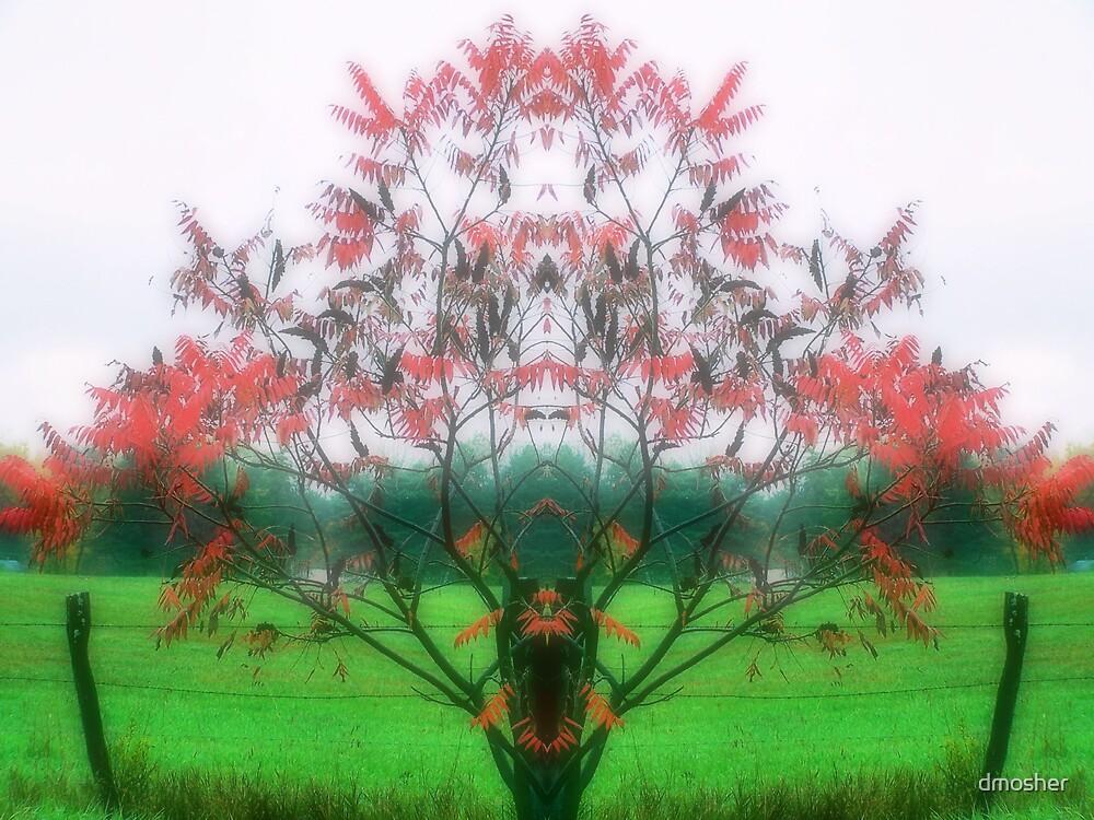 Autum Mist by dmosher