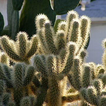 Sunlit Cactus by ronibgood