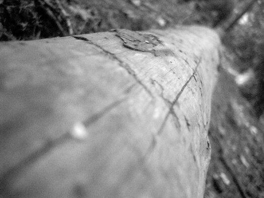 deadwood by Ryan Green