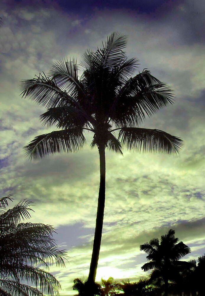 The stately palms by dominick