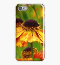 Day's Eye! - Black Eyed Susan - Cone Flower NZ iPhone Case/Skin