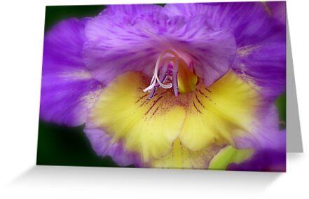 Splendid Beauty! - Gladiolus Flower - Gore NZ by AndreaEL