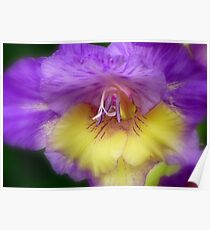 Splendid Beauty! - Gladiolus Flower - Gore NZ Poster