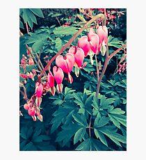 West Coast Gardens: Bleeding Beauties Photographic Print