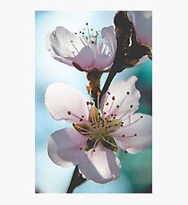 Peach Blossoms 11 Photographic Print