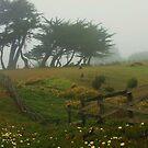 Misty Fields by Barbara  Brown