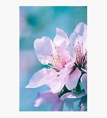 Peach Blossoms 13 Photographic Print