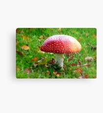 Magical Hallucinations - Amanita Muscaria - Fungi - NZ Metal Print