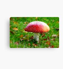 Magical Hallucinations - Amanita Muscaria - Fungi - NZ Canvas Print