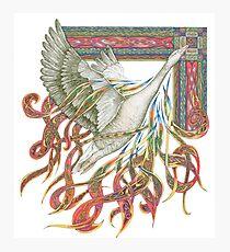 Wild Goose Photographic Print