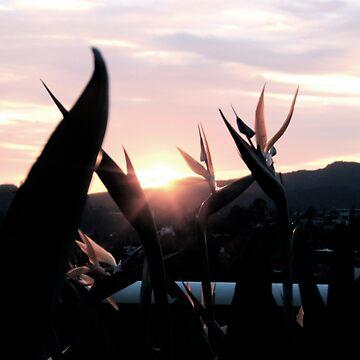 Californian Sunset by TimDuck