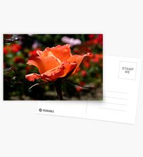A Single Rose Just For You! - NZ - Southland Postcards
