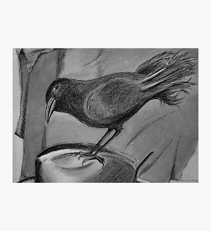 Black Crow Sits on Hat Photographic Print