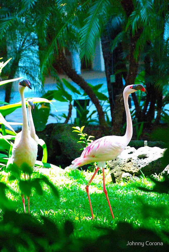 Bird by Johnny Corona