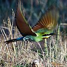 Bee-eater Take Off by Phillip Weyers