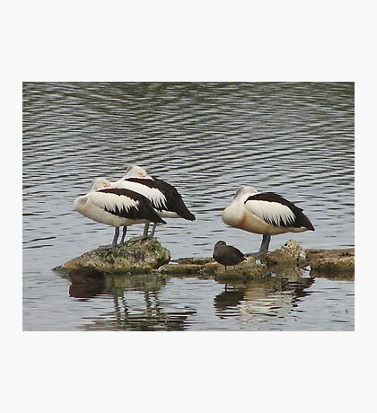 Birds of a Feather..... Photographic Print