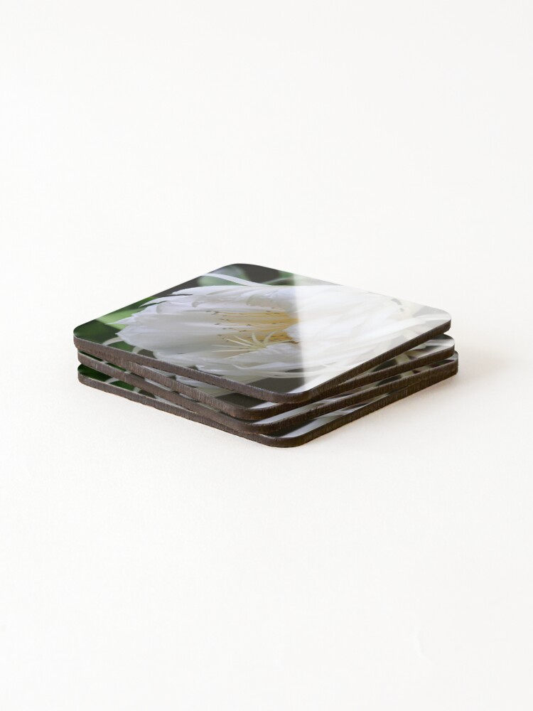 Alternate view of Unusual flower - Queen of the Night (Epiphyllum Oxypetalum) Coasters (Set of 4)