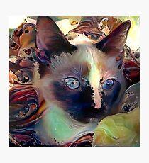 Zoe Cat Photographic Print
