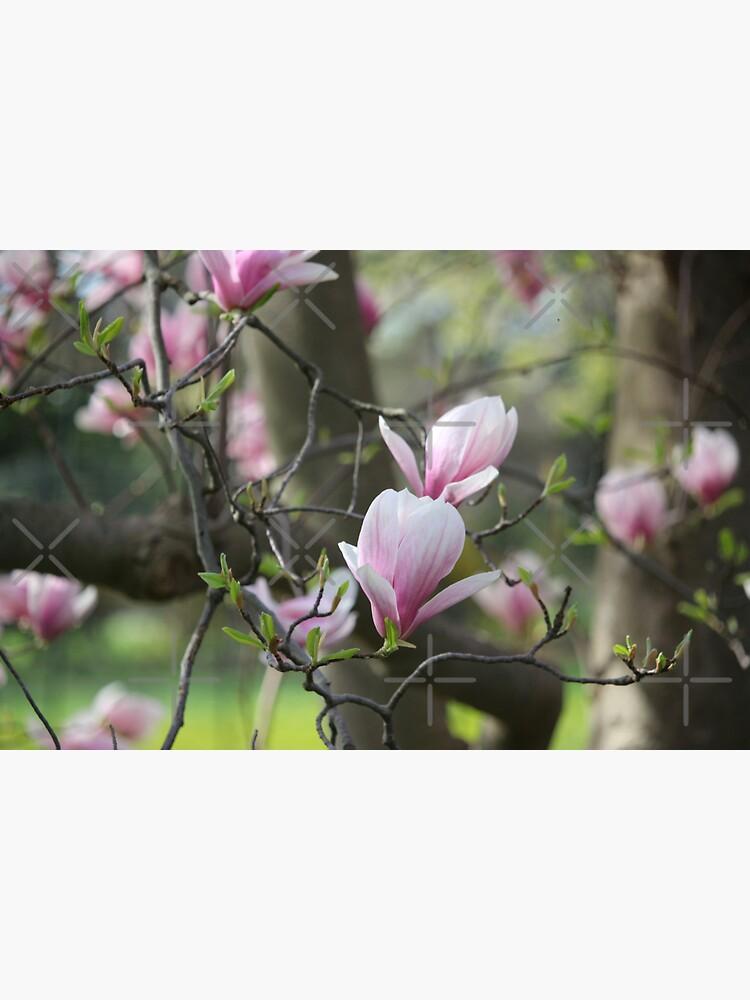 Spring's blush by debfaraday
