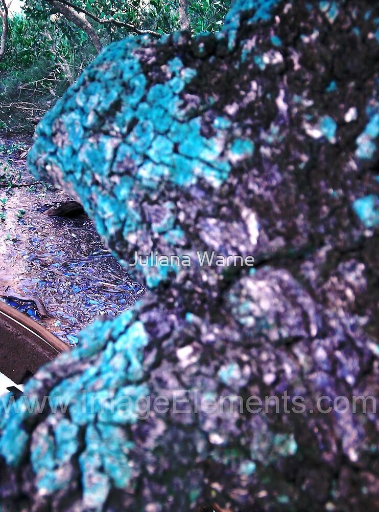Bluebarking  by Juliana Warne