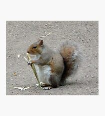 Squirrel. Kew gardens. London Photographic Print