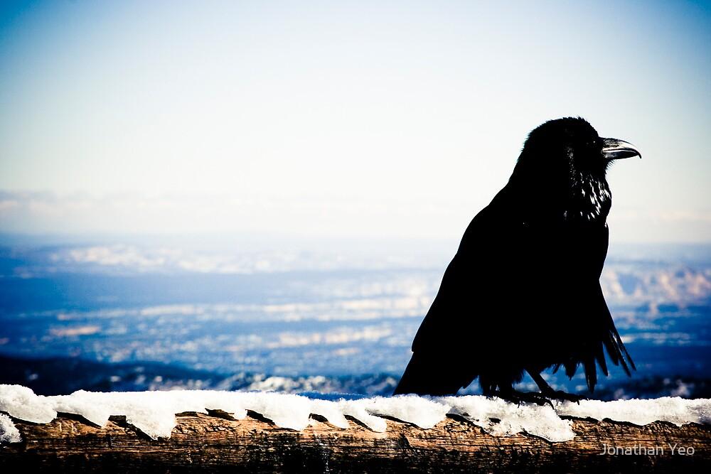 Solitary Raven by Jonathan Yeo