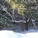 new snow by teddynanie