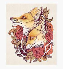 Lámina fotográfica Red Fox Bloom