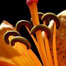 Birthday Lily by Katseyes