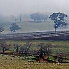 Cootamundra Fog by GailD