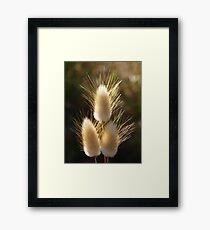 Sunlit Grass Framed Print