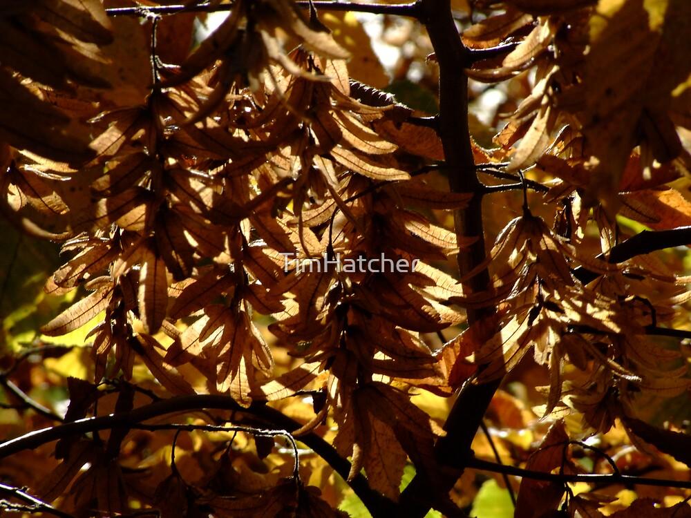 Autumn Light by TimHatcher