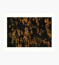 Maple flowers   Art Print