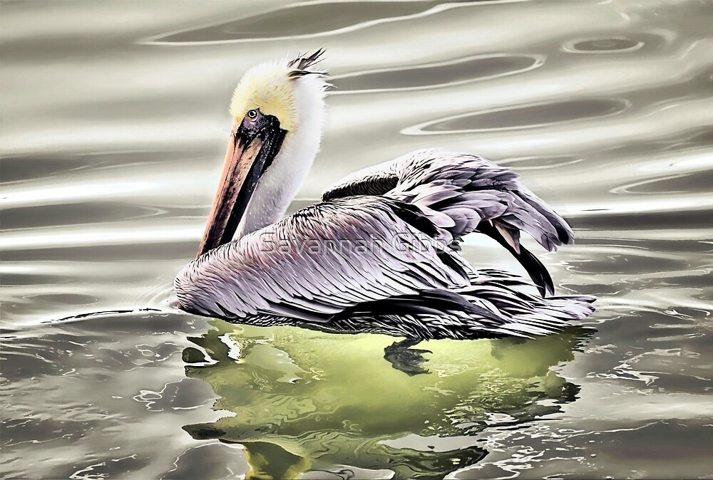 Pelican by Savannah Gibbs